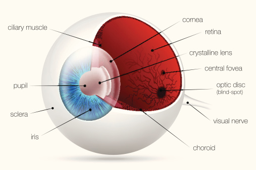 Anatomy Of The Human Eye Dr John Goosey