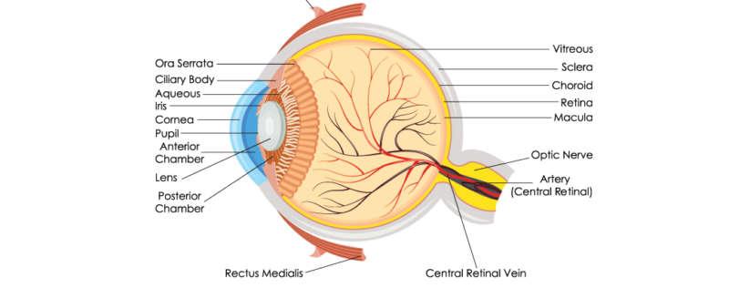 eye specialist Houston